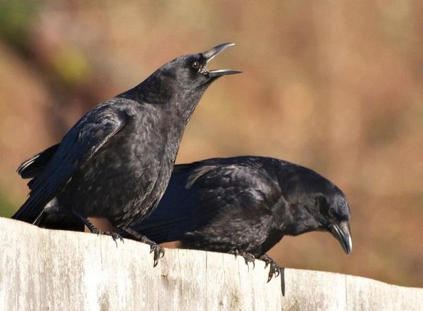 Chim bay vào nhà và đổi hướng là điều báo xui rủi
