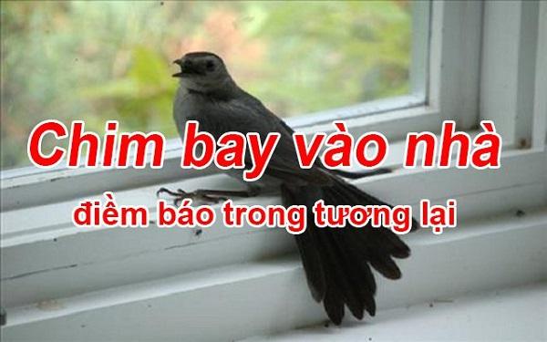 Chim bay vào nhà mang rất nhiều ý nghĩa khác nhau