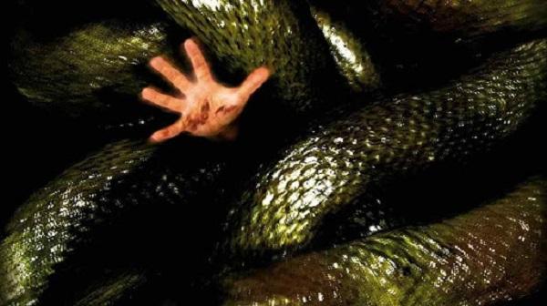 Mơ thấy rắn khổng lồ nuốt người khác cảnh báo nhiều nguy hiểm