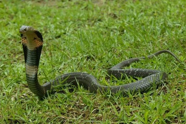 Mỗi giấc chiêm bao về rắn sẽ có một ý nghĩa nhất định