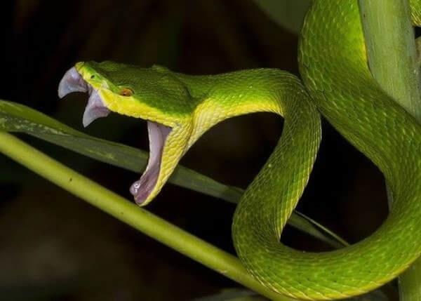 Ngủ mơ rắn cắn người khác tức là bạn đang gặp may mắn