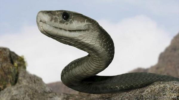 Thấy rắn khổng lồ đang phá hoại trong giấc mơ là một điềm xấu