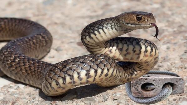 Tùy từng trường hợp mà thông điệp khi rắn bò vào nhà khác nhau